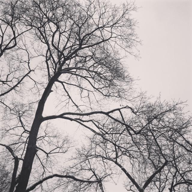 winter tree, mindfulness