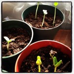 Planting Seeds of Inner Wisdom